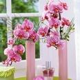 Vài mẹo nhỏ để bảo quản nước hoa